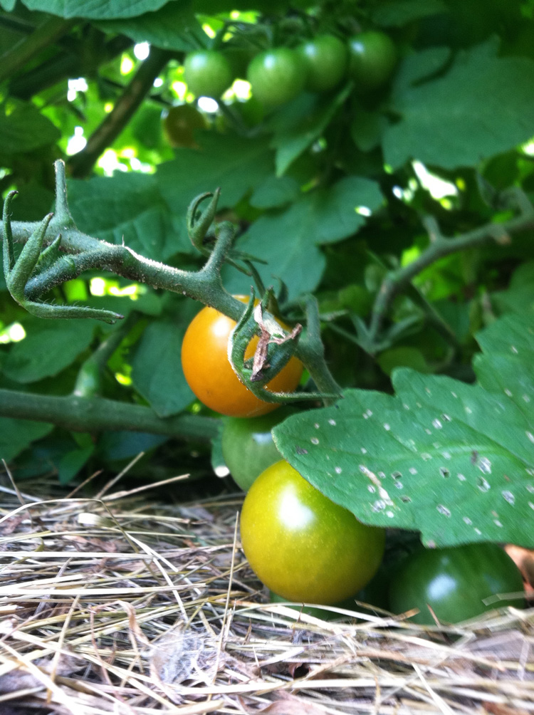 On ripening